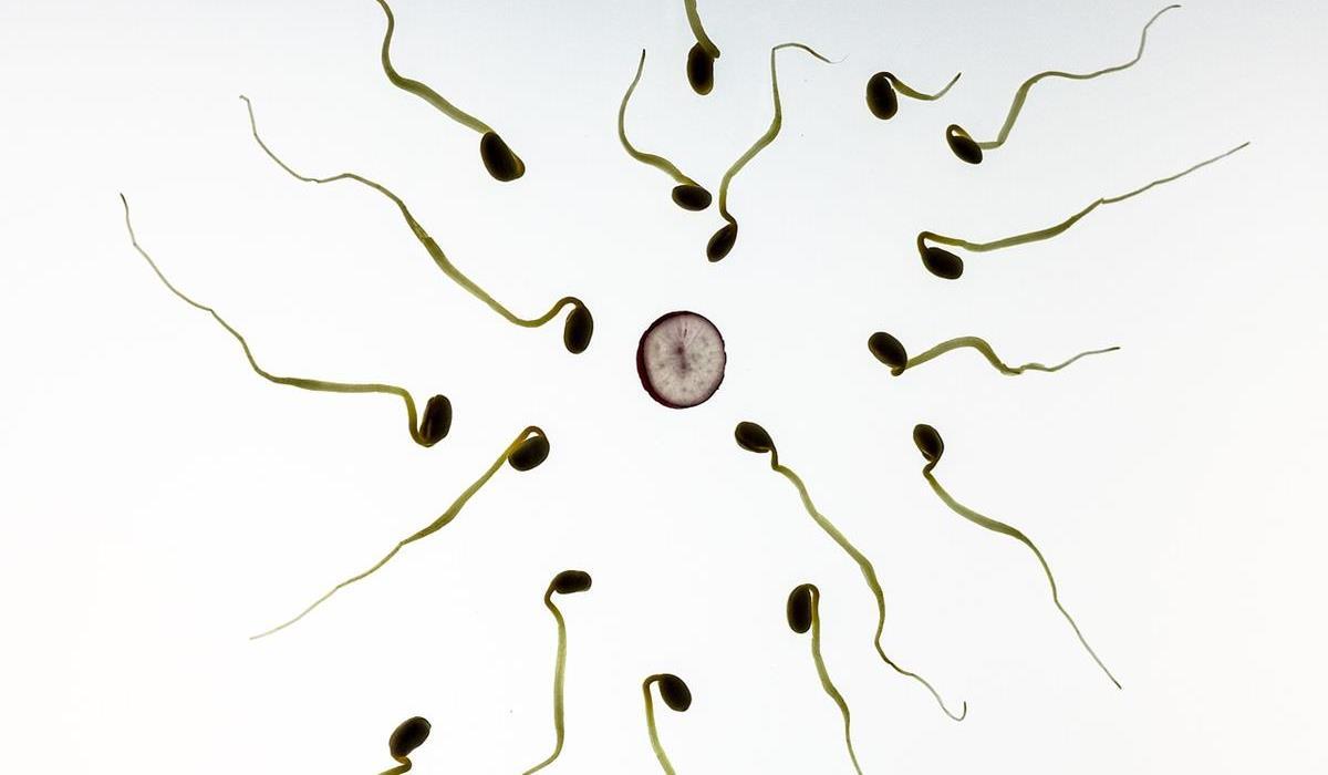 Ile czasu żyją plemniki poza organizmem